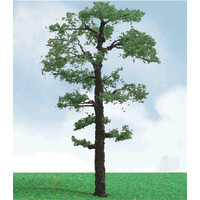 Scots Pine, 3.5in to 4in, (2 per pack)