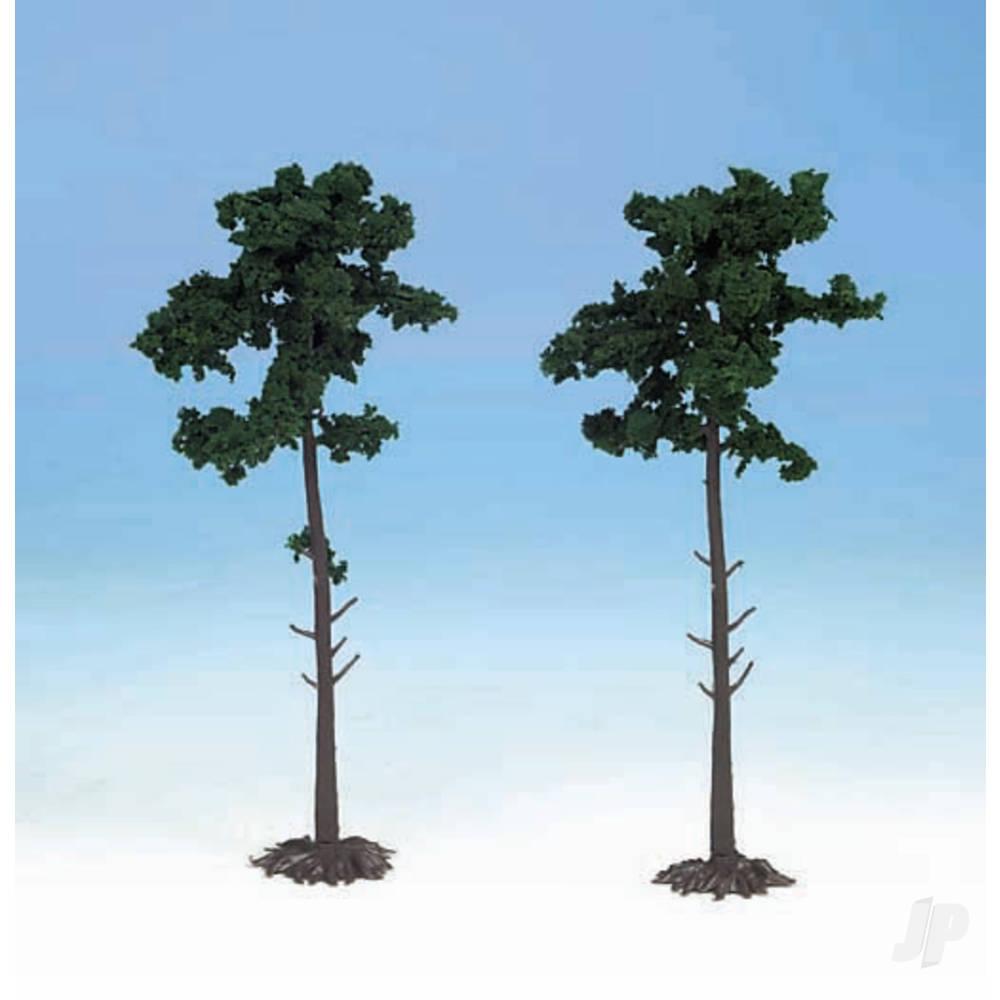1150 2 Scots Pine Trees 18cm