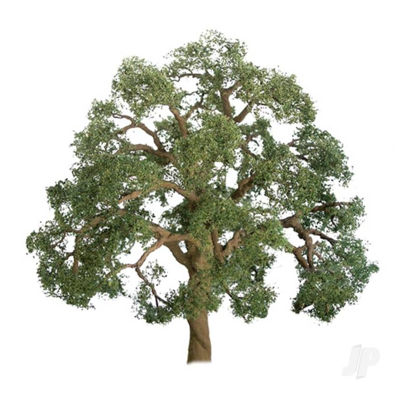 Live Oak, 1-1/2in, (4 per pack)