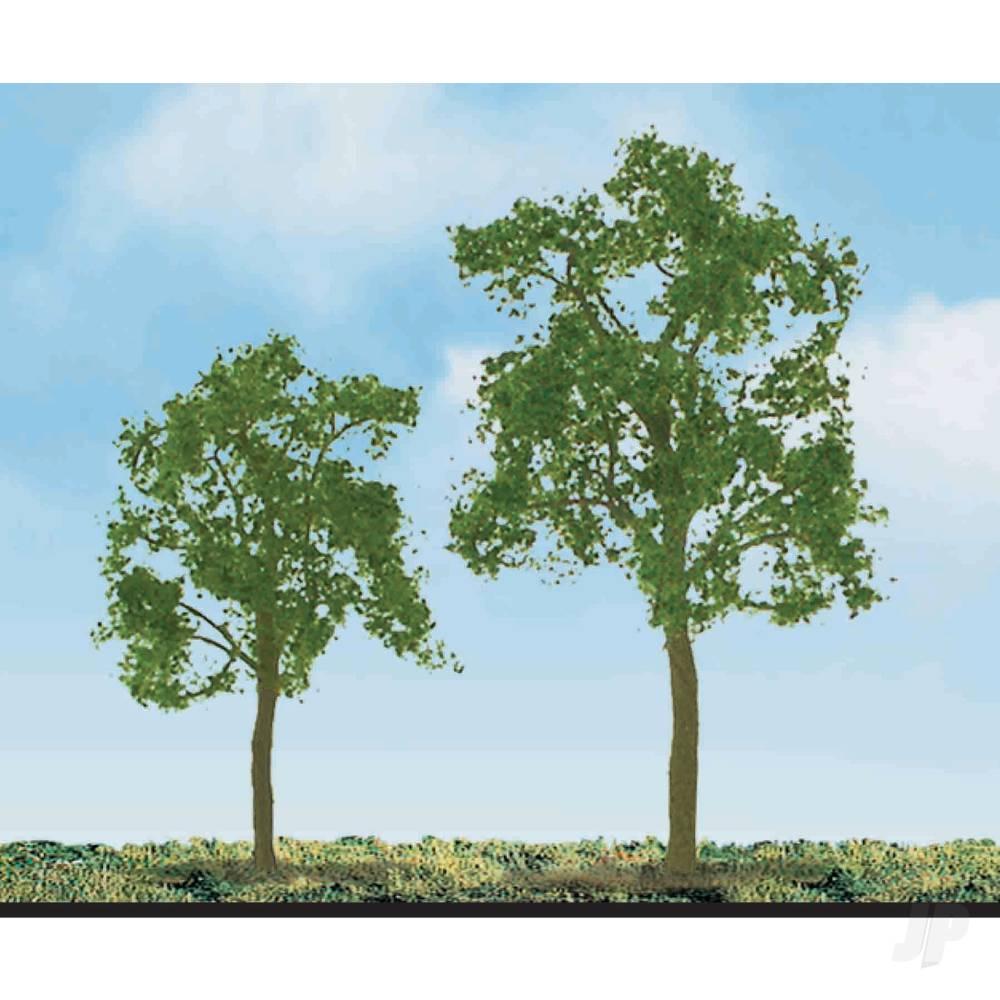 Ash Tree, 3/4in, (6 per pack)